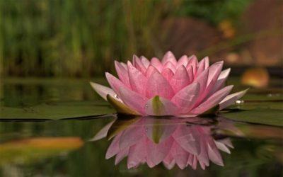 Ce jour d'hiver où un lotus a fleuri sur le plateau d'Avron (accepter son âge)