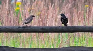 Deux oiseaux se rencontrent